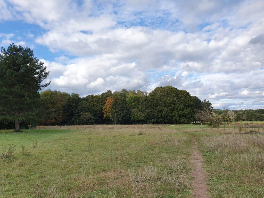 Blauer Himmel, weiße Wolken, grün und rote Blätter - die Natur auf der Lichtwiese bereitet sich farbenfroh auf den Winter vor.